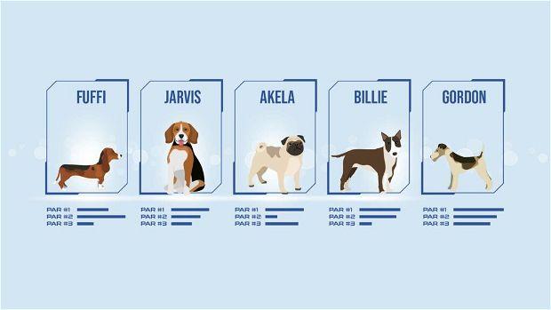 Anagrafe canina in blockchain. Immagine rappresentativa.